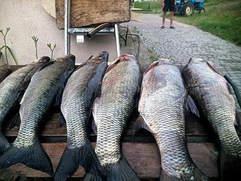 Рибальська база