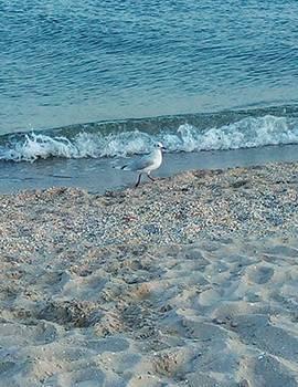 Бердянськ пляжі