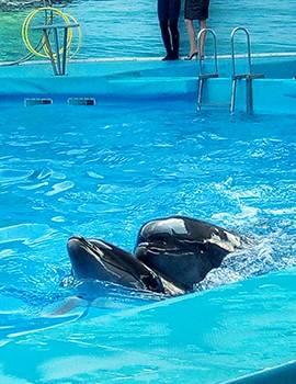 Бердянськ дельфінарій фото