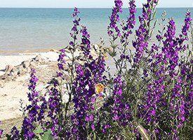 Отдых на Азовском море летом