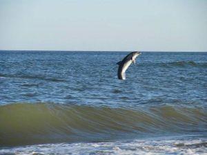 Відпочинок з харчуванням на морі