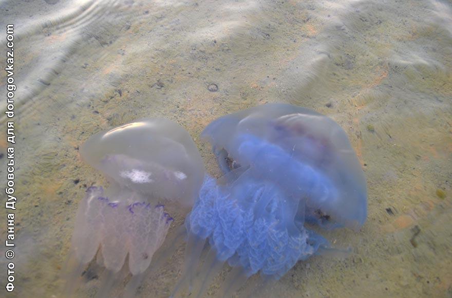 Кінбурнська коса море фото