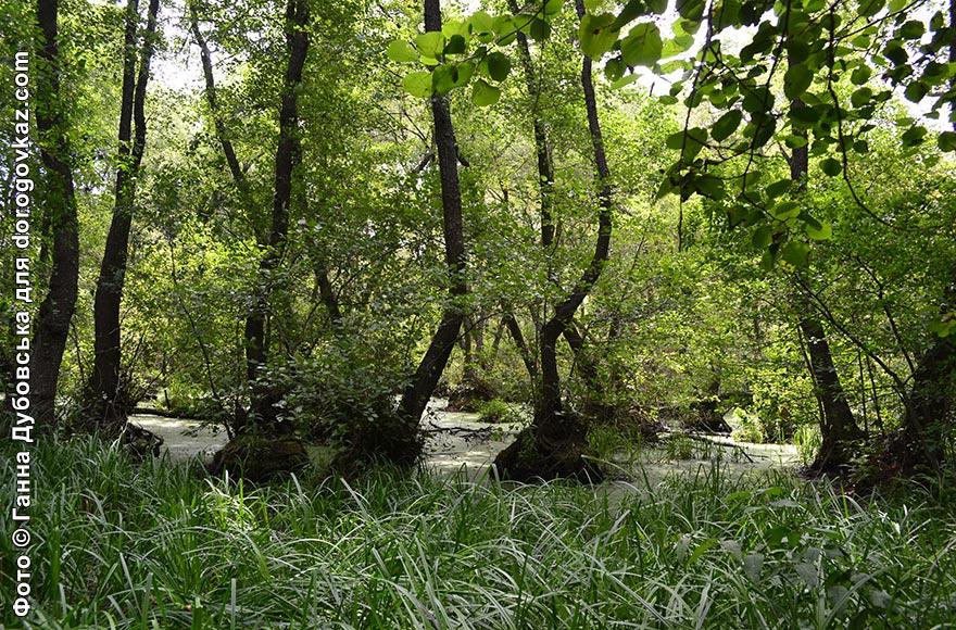 Волижин ліс фото