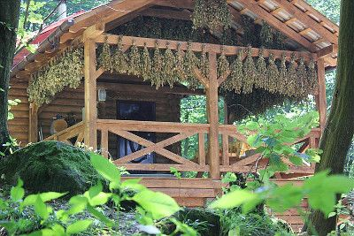 Відпочинок вихідного дня, «Лісова садиба»