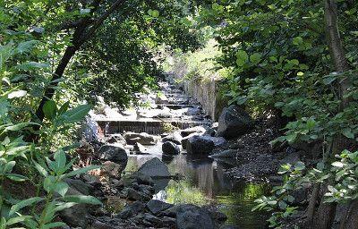 Заміський відпочинок, «Лісова садиба»