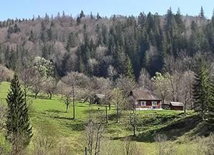 «Гірська соната» Микуличин вид на гори