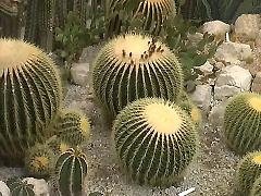 Нікітський ботанічний сад, оранжерея кактусів