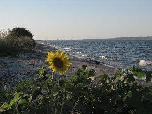Наметове містечко біля моря
