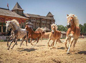 Київ коні Парк Київська Русь