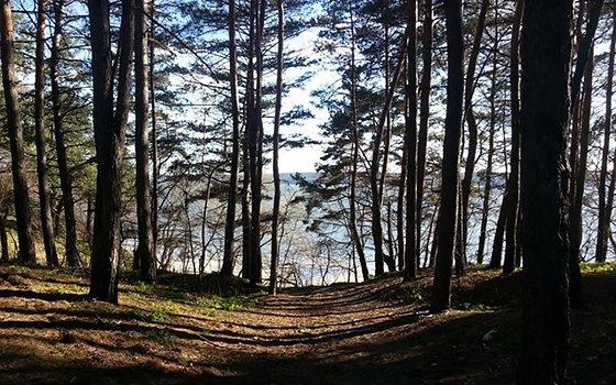 Печенізьке водосховище ліс