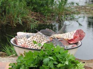 Рибалка на річці Турунчук